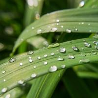 Macro Plant - Water Drops