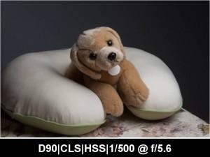 wpid919-622N.CLS_.HSS_.TTL_.0EV.F5.6.500.jpg